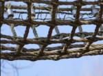 Открываем веревочный парк для детей